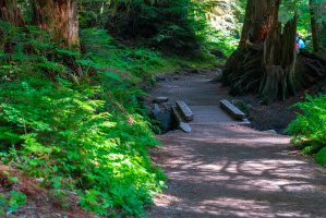 Sol Duc Falls Trail @ Olympic National Park